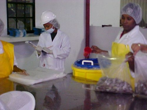 BAHA monitors seafood processing plants