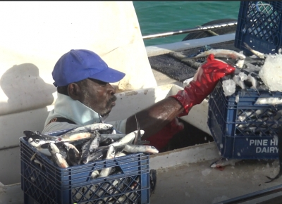 Technical experts discuss updated plan for Eastern Caribbean flyingfish fishery